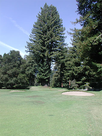 courseLayout1Green